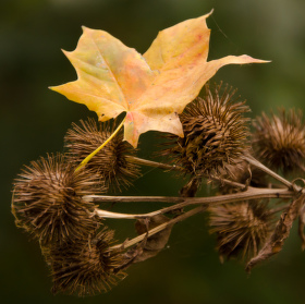 prostě podzim