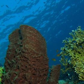 Krása korálů