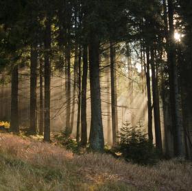 Podzimní slunce pod Pancířem