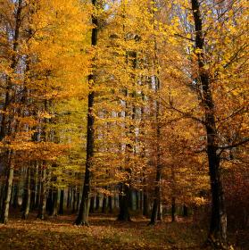 Žlutý podzim
