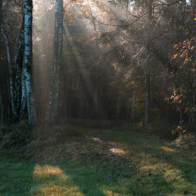 Cestou světla