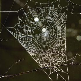 Dračí pavučina