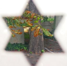 Podzim na židovském hřbitově