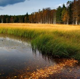 Podzim u Starého rybníka