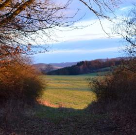 Odpolední procházka podél lesa