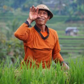 Pozdrav z rýžového pole