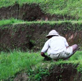 Rýžová pole Tegalalang