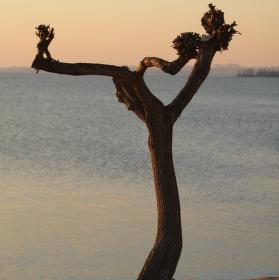 Strom se srdcem