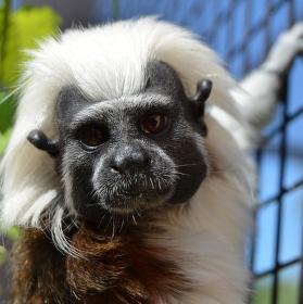 Zvědavá opička