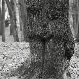strom jako živý