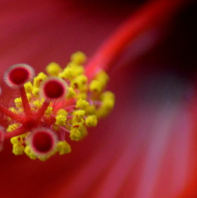 Do nitra květu..