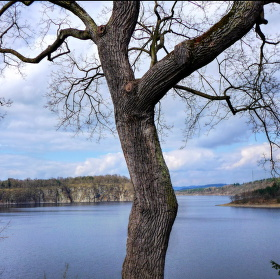 Voda a strom