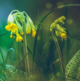 Zbytky jara na Stránské skále Brno
