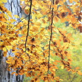 Podzim