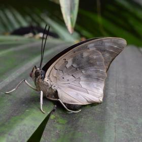 motýlí usměv