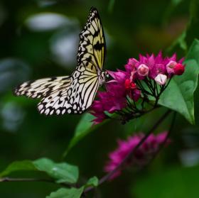 Motýlí modelka