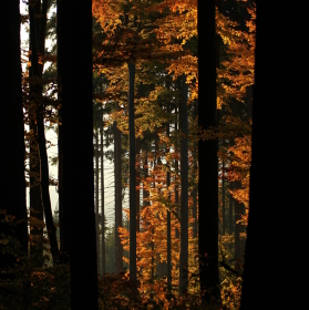 Podzim hoří II.