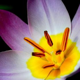 Květinka z parku