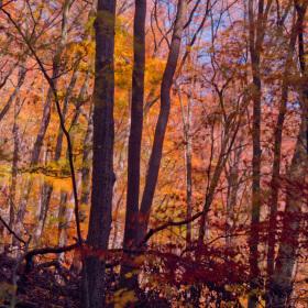 Jednou takhle v lese