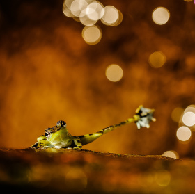 HighFive! Frog!