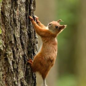 Už mi neseš ten ořech ?