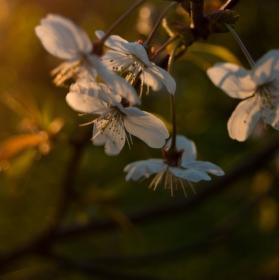 Vzpomínka na jaro