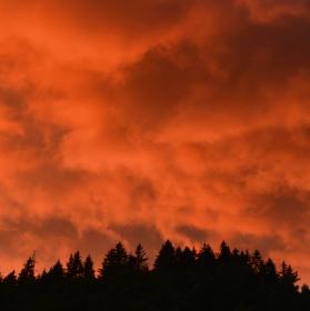Liščí obloha