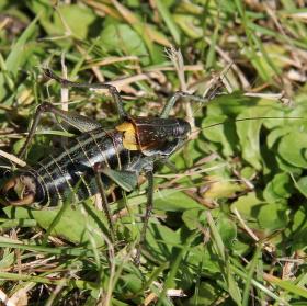 překvápko v trávě