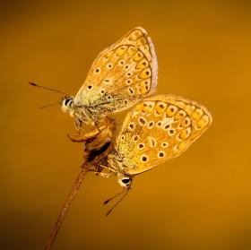 Motyli kvet