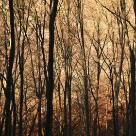 V korunách podzimu