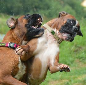 Boxerský zápas 2