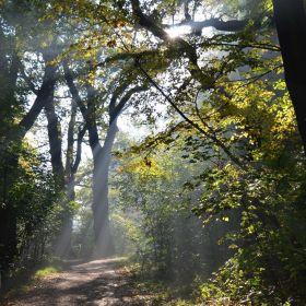 Les v Tovačově