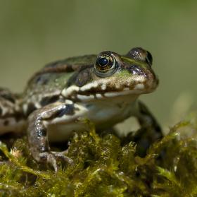 Žabí pohled