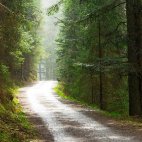Deštívý les