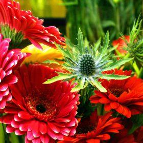 Svět květin ....