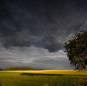 Strom a ještě jeden strom