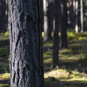 V lese :)))
