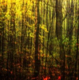 ztracený v lese