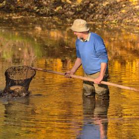 Výlov zlatého rybníku