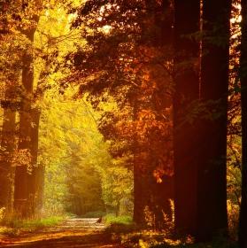 Pohádkový les
