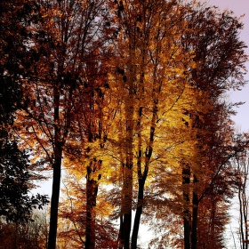 světelný  les