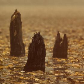 Lužní les XXXII - Přírodní rezervace Rezavka