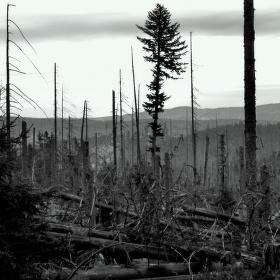 Apokalyptický les