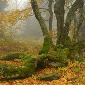 Rýchorský prales - Krkonoše