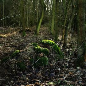 V zapomenutém lese (Pamětníci II)