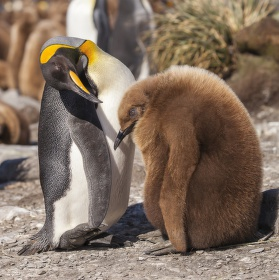 domluva s tučňáky III