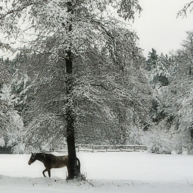 Nehostinná zima u Litavky