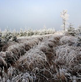 Vzpomínka na letošní zimu
