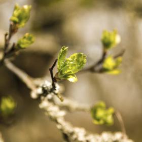 Nejkrásnější období v roce - kdy vše kvete
