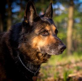 Aran Black Wolf - poslední fotka